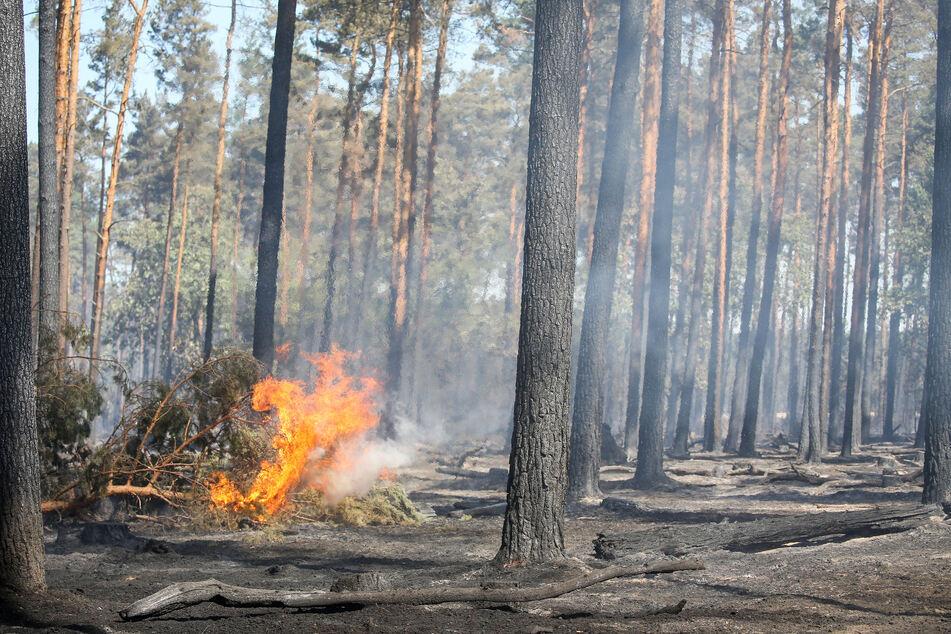 Zwar brannte es in den Wäldern Sachsen-Anhalts 2020 vielfach, im Vergleich zum Vorjahr hielt sich die Zahl jedoch in Grenzen.