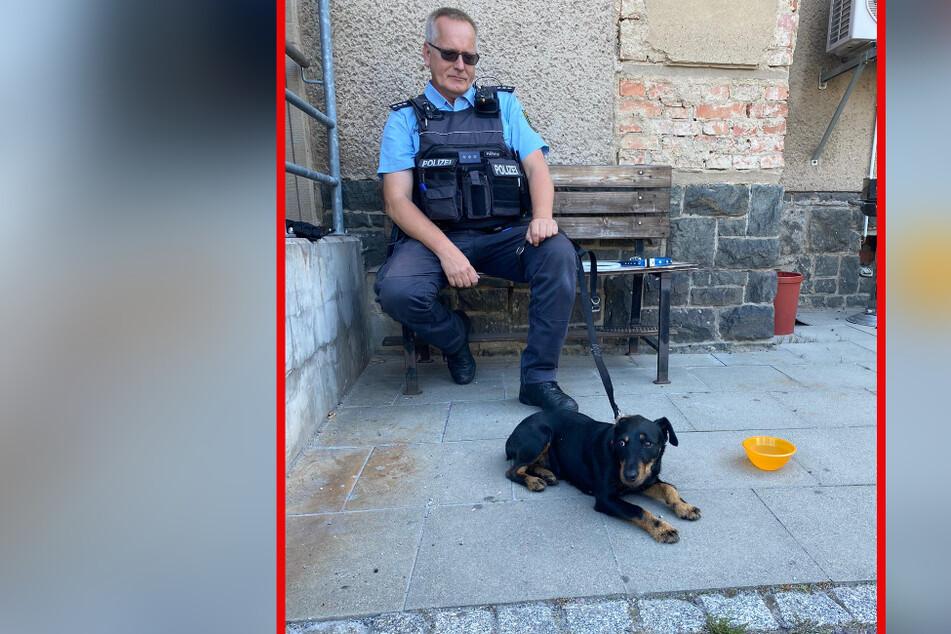 Wiederholungstäterin! Polizei nimmt herrenlose Hundedame mit aufs Revier