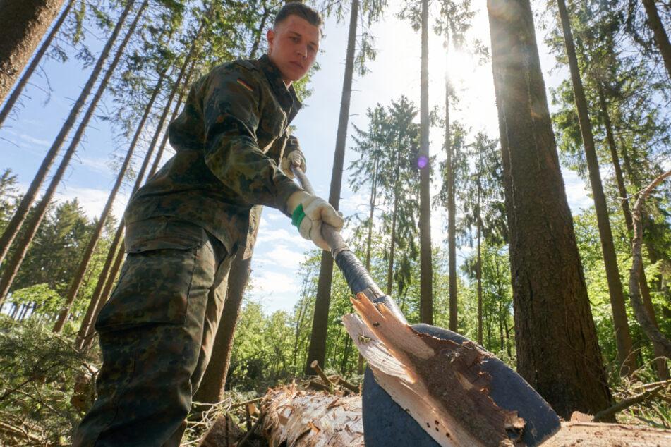 Hilferuf der Waldbesitzer: Ist der Borkenkäfer ein Fall für die Bundeswehr?