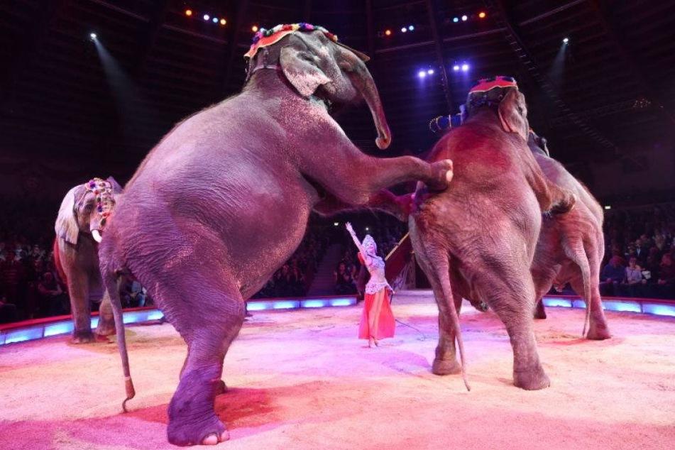 Rathaus verbannt umstrittene Zirkus-Dressuren