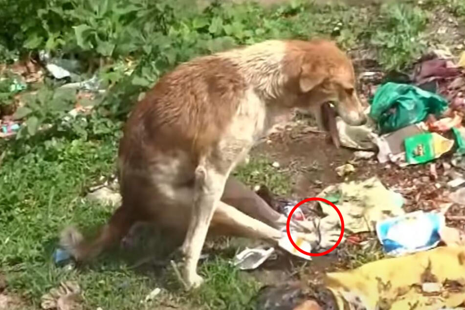 Die hinteren Pfoten des Hundes waren zusammengebunden.