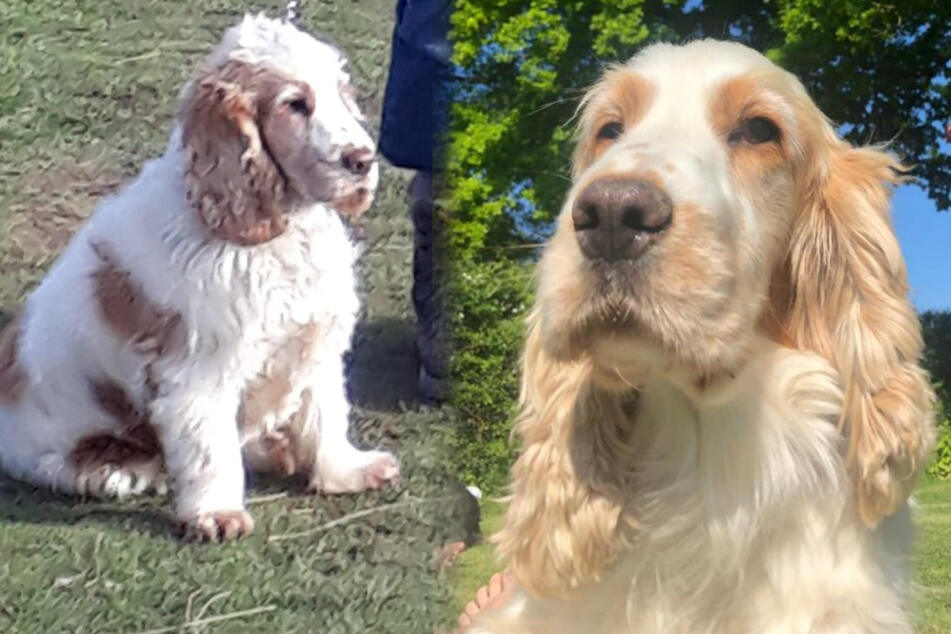 Elderly woman begs for safe return of stolen dog, then something amazing happens!