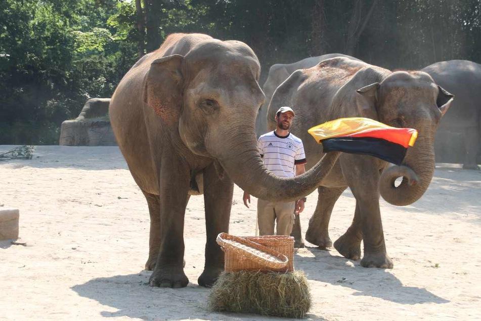 Elefantkuh Yashoda zog die deutsche Fahne aus der Kiste.