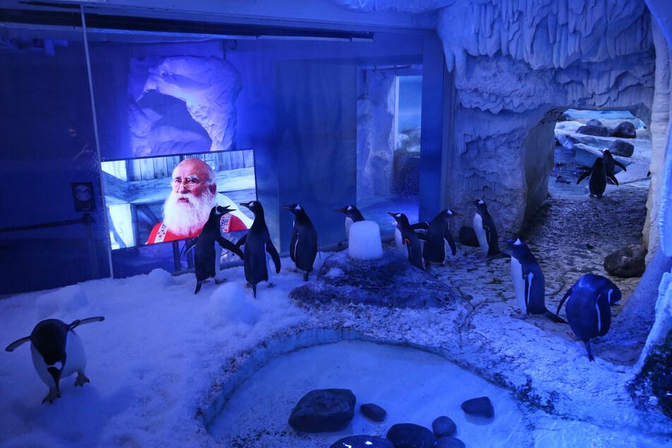 Offenbar gucken auch Pinguine gerne gemeinsam Filme.