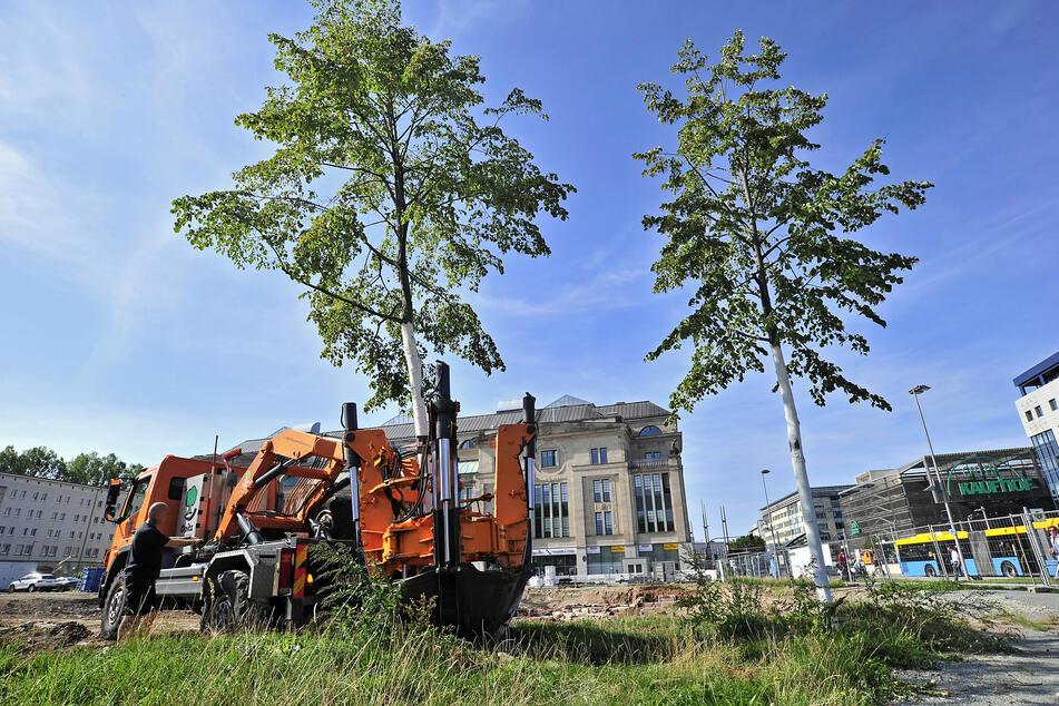 Eine Großbaum-Verpflanzmaschine sticht die Sommerlinde vor dem Tietz ab. Der Wurzelballen hat ein Volumen von einem Kubikmeter.