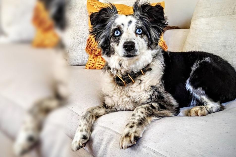 Geklauter Hund kommt nach vier Monaten zurück nach Hause