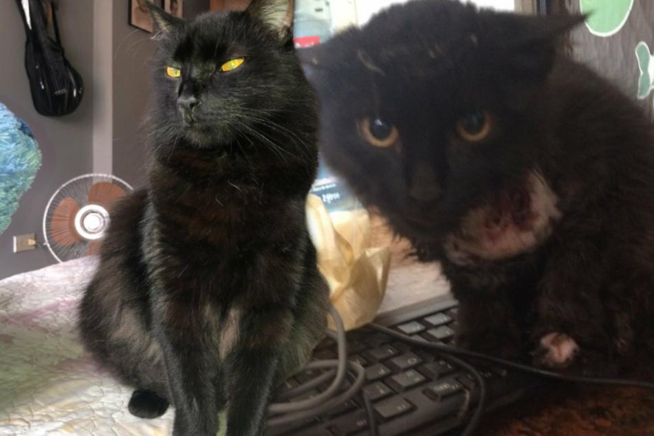 Bei seiner Rettung war Romeo noch völlig verwahrlost (rechts). Doch vier Jahre später sieht der Kater viel erholter aus.