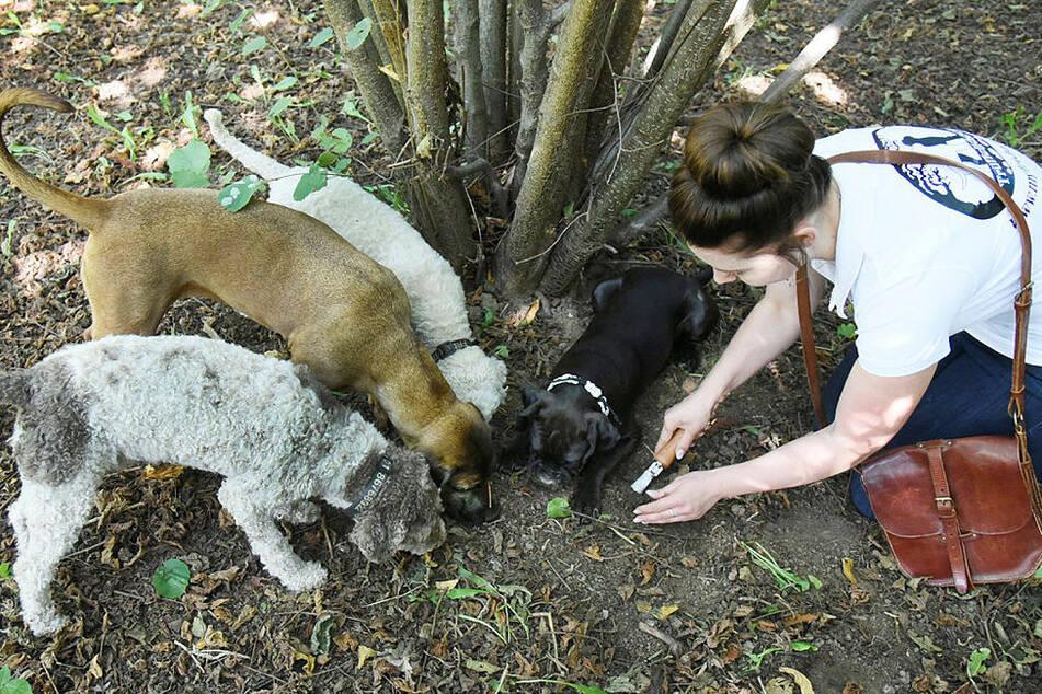 Brav! Tempi, Resi, Frida und Buddy (v.l.) zeigen Trainerin Josy Marie (26) eine Trüffel-Fundstelle.
