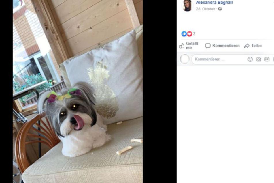 Der Hund von Alexandra Bagnall konnte sich vom Todes-Köder befreien.