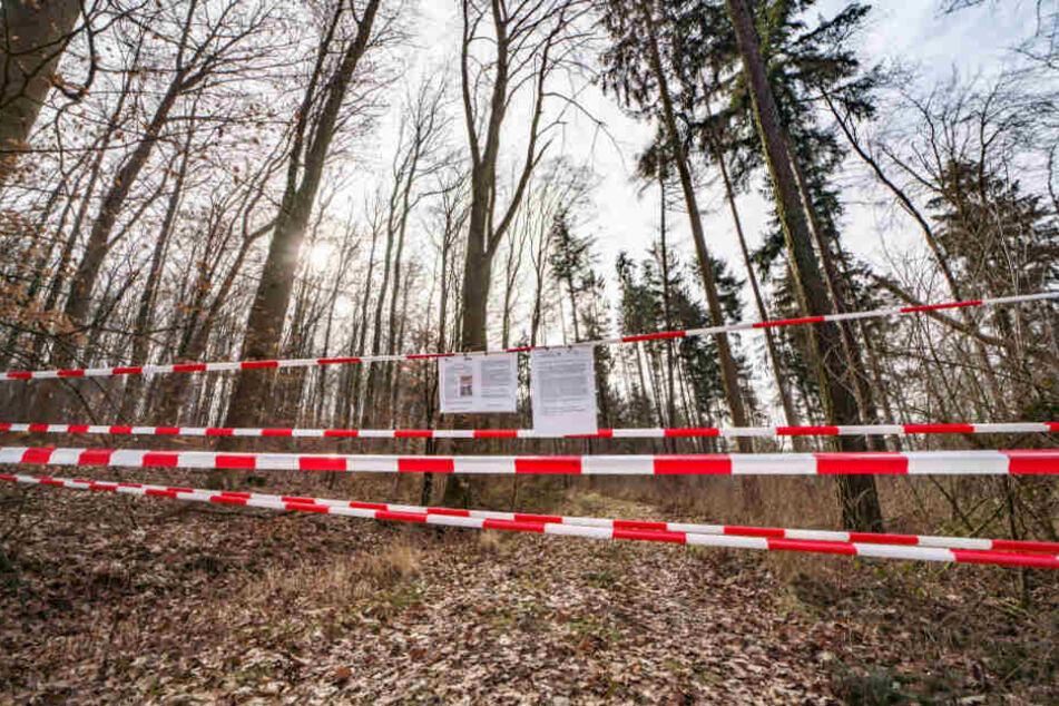 Dieser Weg ist für Wanderer wegen der Rußrindenkrankheit gesperrt.