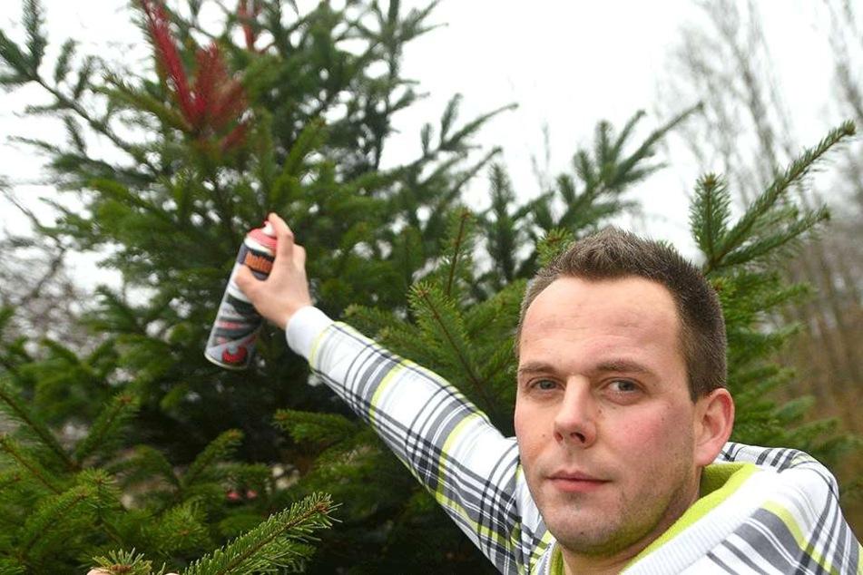 Mit rosa Farbe und GPS hat Sebastian Schäfer (30) die Tannen seines Vaters aufgerüstet.