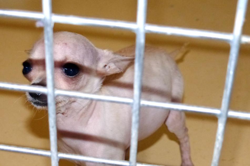In Zusammenarbeit mit dem Tierheim konnten alle Tiere tierschutzgerecht untergebracht werden.