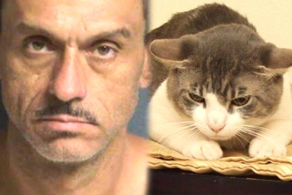 Mann verabreicht seiner Katze Drogen und würgt das Tier, bis es aufschreit