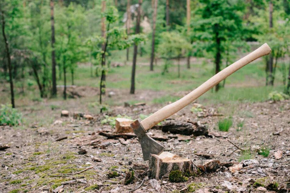 Unbekannte haben heimlich 25 Bäume gefällt und abtransportiert. (Symbolbild)