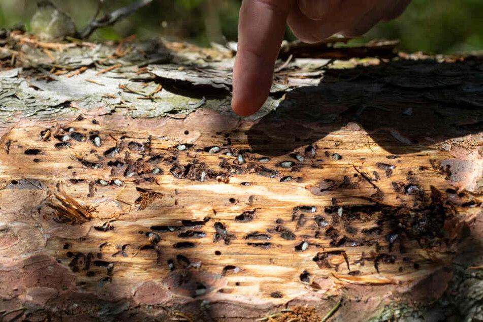 """""""Jahrhundertkatastrophe"""": Thüringer Waldbesitzer sehen sich extremen Schäden gegenüber"""