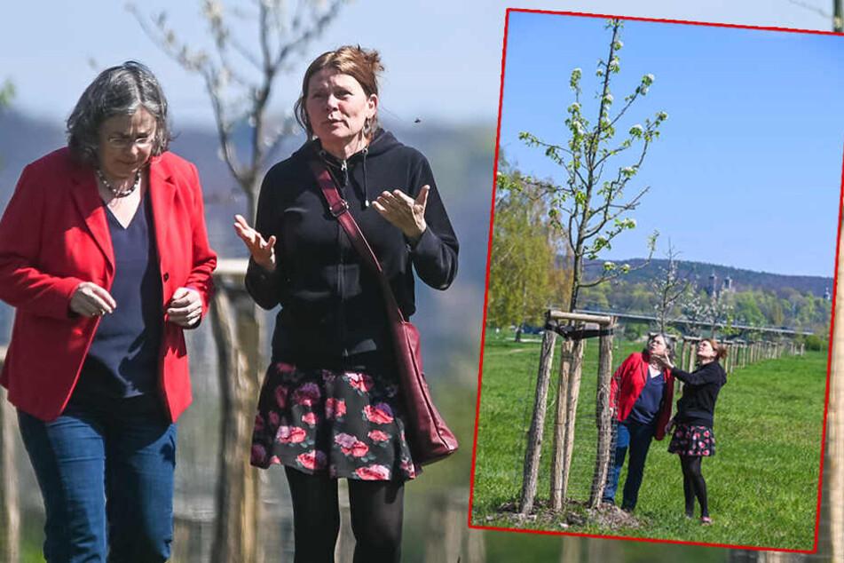 Umweltbürgermeisterin Eva Jähnigen (53, Grüne) und Petra Costa (60), Sachbearbeiterin im Umweltamt, in der Obstwiese.