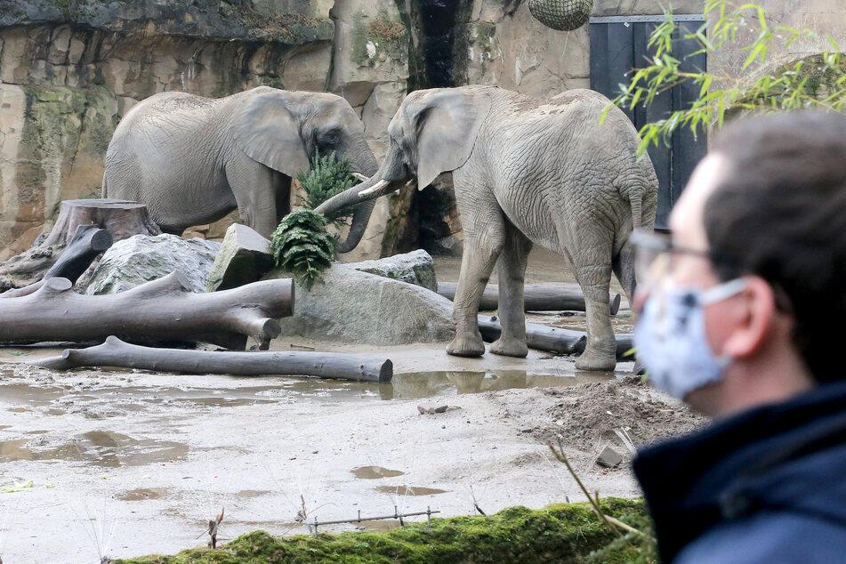 Millionen-Verluste durch Corona: Wie geht es in NRW-Zoos weiter?