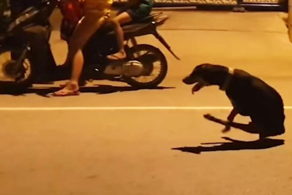 """Der Hund kroch verletzt an mehreren Passanten vorbei, ehe sich der """"Kameramann"""" erbarmte und ihm Hilfe holte."""