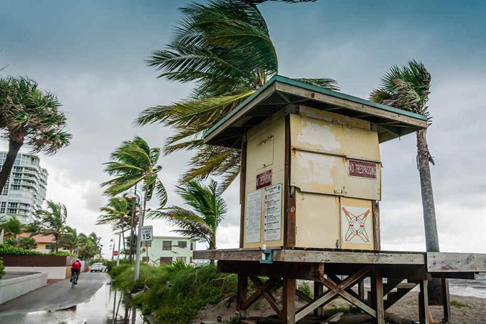 Der Wind weht am Hollywood Beach. Die Küstenregionen am Atlantik bereiten sich auf den Hurrikan vor.