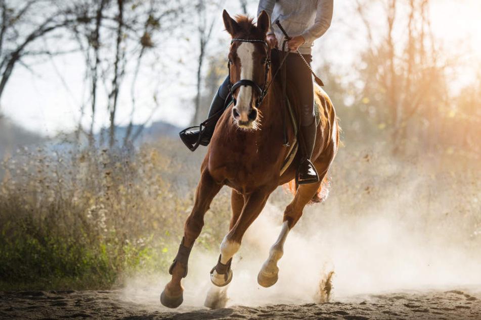 Flucht wie im Wilden Westen: Diebin steigt aufs Pferd und reitet einfach davon!