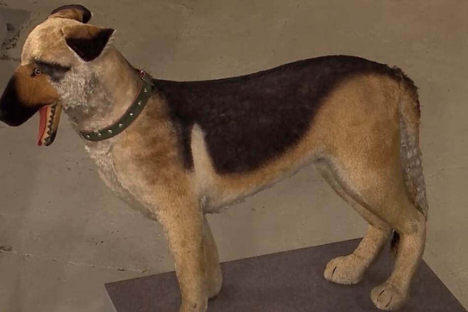 Der Steiff-Hund wurde 1966 gefertigt.