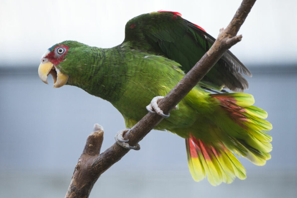 Viele exotische Vögel konnten gerettet werden. (Symbolbild)