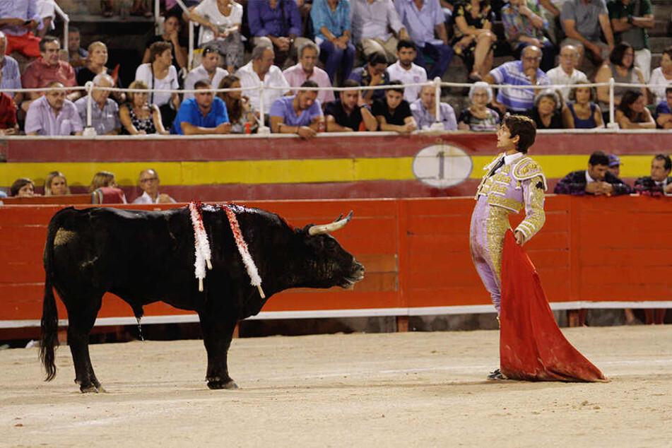 Der Stierkampf ist auf der Balearen-Insel nun wieder vollumfänglich erlaubt.