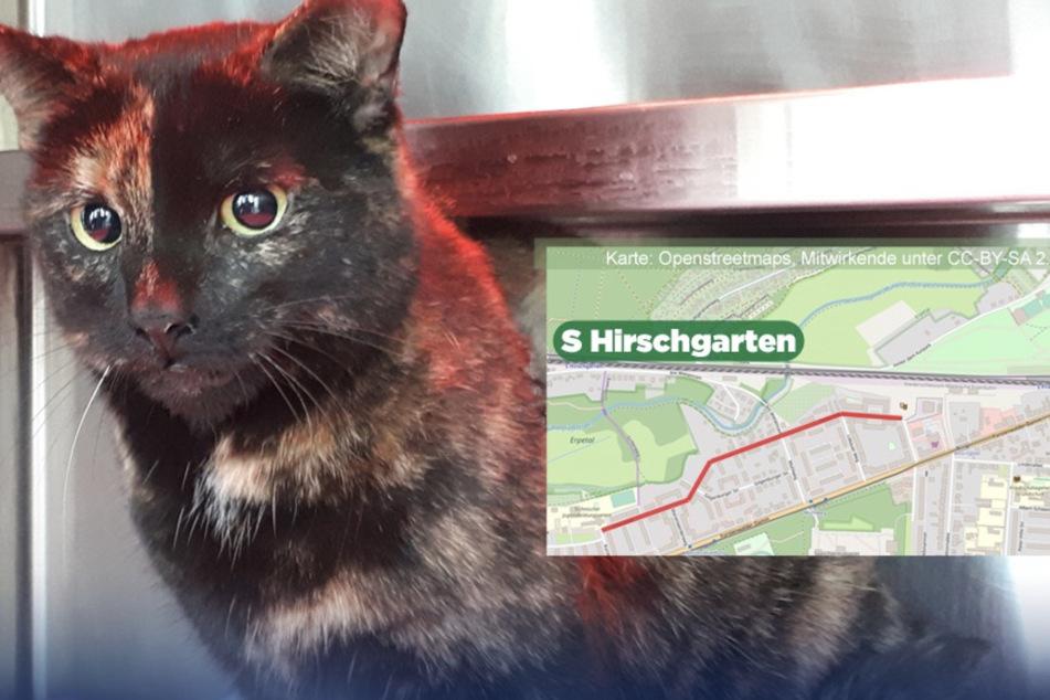 Katze kriecht in Motorraum und macht unfreiwillige Spritztour