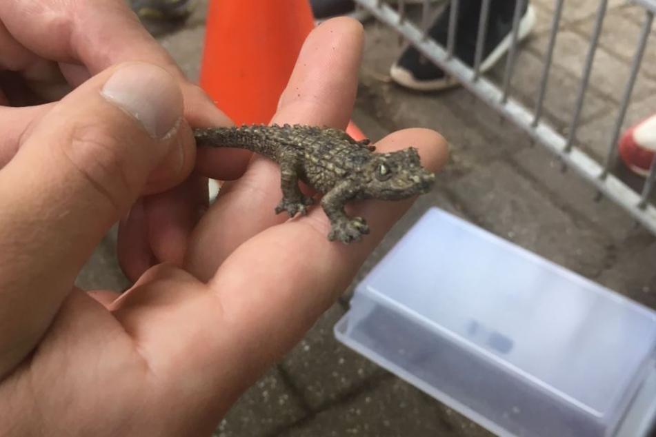 Das Reptil ist gefangen!