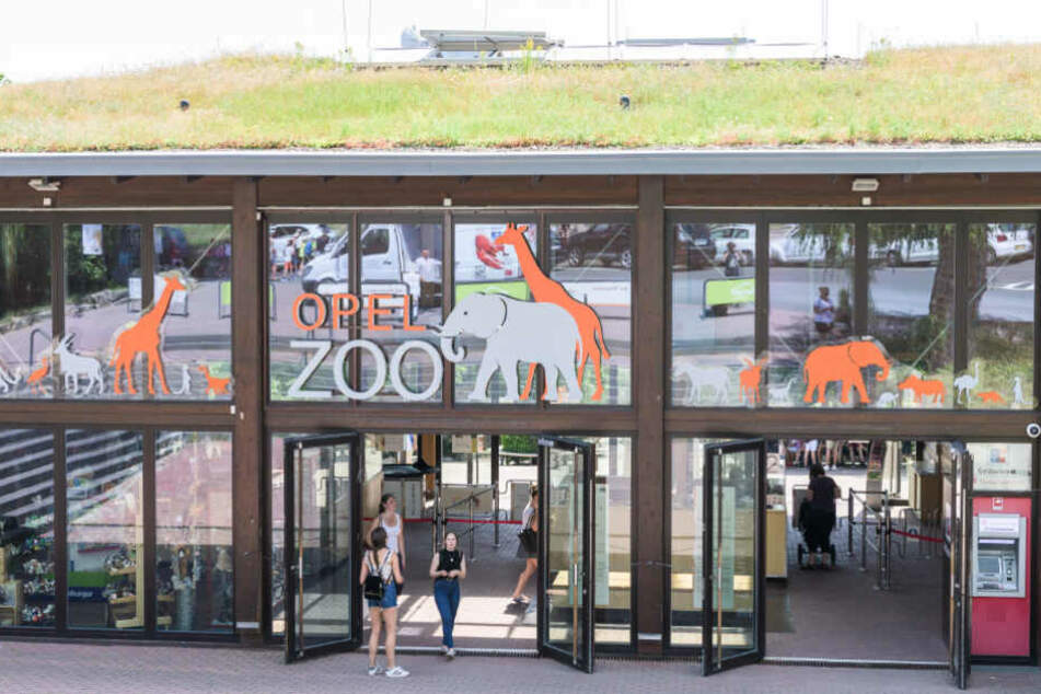 Besucher stehen vor dem Eingang des Opel-Zoos (Archivbild).