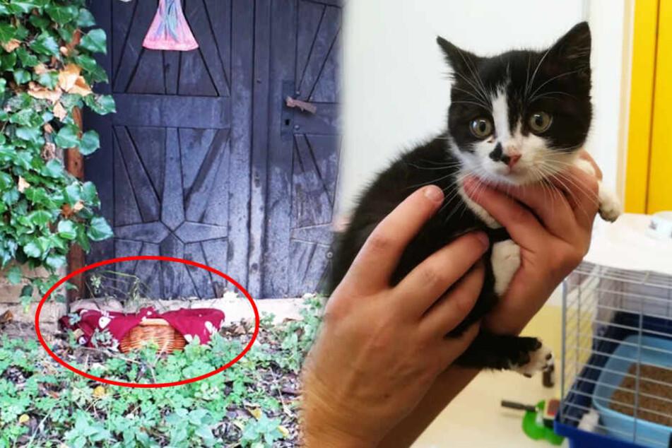 Süße Katzenbabys achtlos ausgesetzt: eine stirbt, andere verängstigt