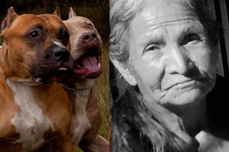 Phoenix woman mauled to death by dogs on her own front porch
