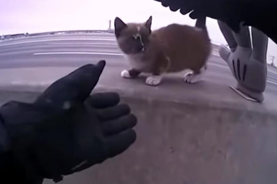 Polizist entdeckt Kätzchen mitten auf Autobahn und handelt sofort
