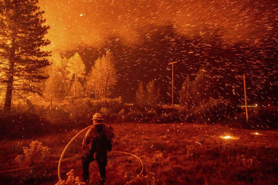 Bevor die Waldbrände derart eskalieren wie hier in Kalifornien, verbreiten sie sich meist über weite Strecken völlig unbemerkt. Und sind dann kaum noch zu kontrollieren.