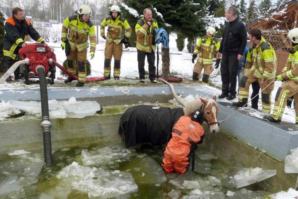 Drei Stunden lang versuchten die Männer, das arme Tier zu retten.