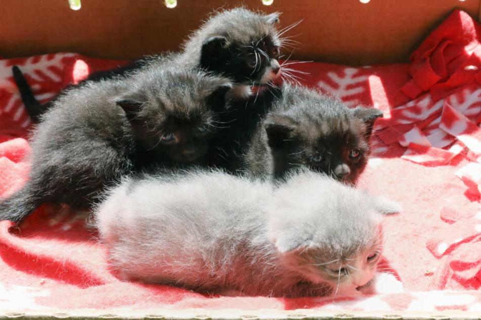 Mehrere Katzen wurden aus der Wohnung gerettet und in ein Tierheim gebracht. (Symbolfoto)