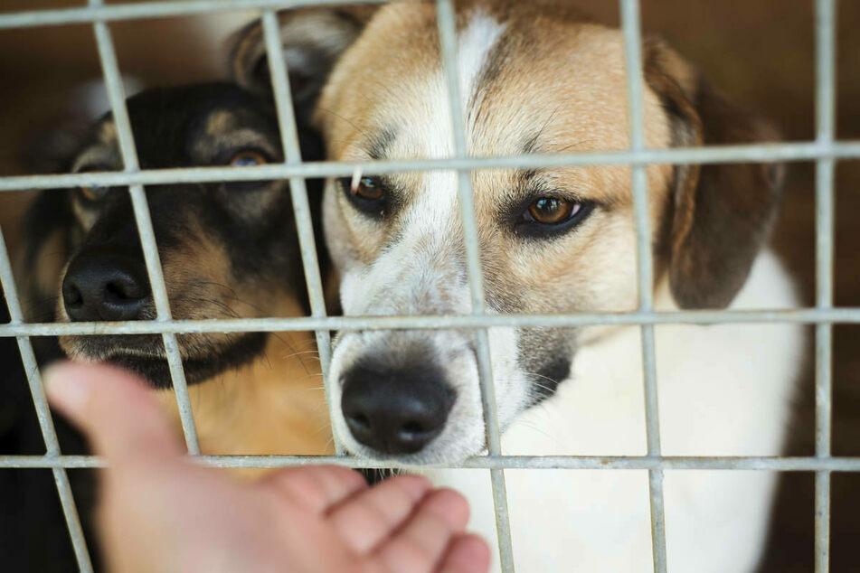 Katastrophale Bedingungen, komplett vermüllt: Polizei rettet 20 Hunde aus illegaler Zucht