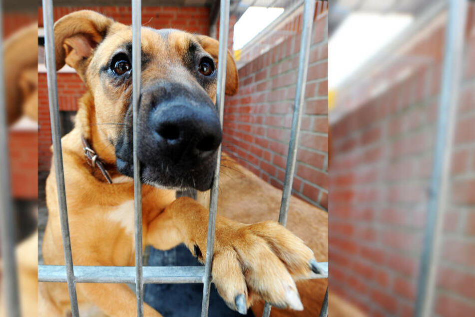 Die Hunde lebten in kleinen Käfigen (Symbolbild).
