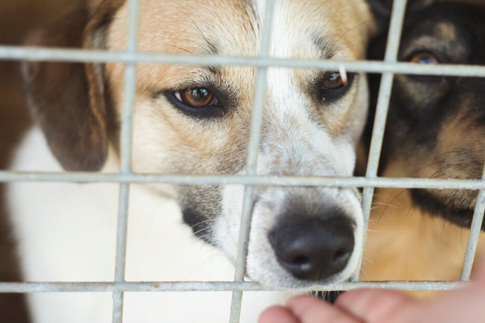 Ehepaar adoptiert Hund, dann essen sie ihn zum Abendbrot auf