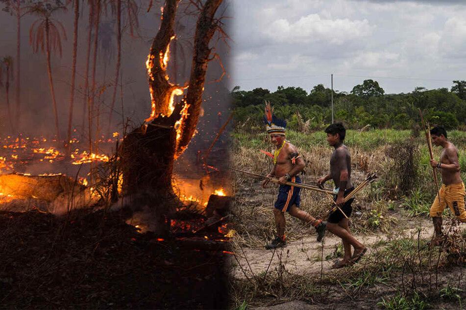 Bedrohte indigene Stämme: Sterben die Amazonas-Ureinwohner aus?