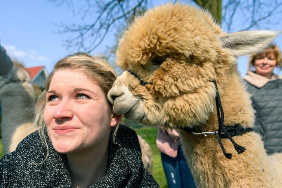 Ein Alpaka berührt mit seiner Schnauze das Gesicht von Andrea, die vorher einen Spaziergang mit dem Tier gemacht habt.