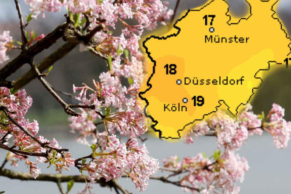 Nordrhein-Westfalen bekommt am Freitag und Samstag schönstes Frühlingswetter.