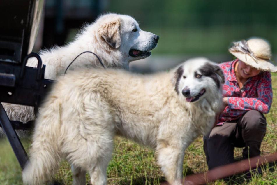 Einsatz auf Leben und Tod: Deshalb sind diese Hunde etwas ganz Besonderes