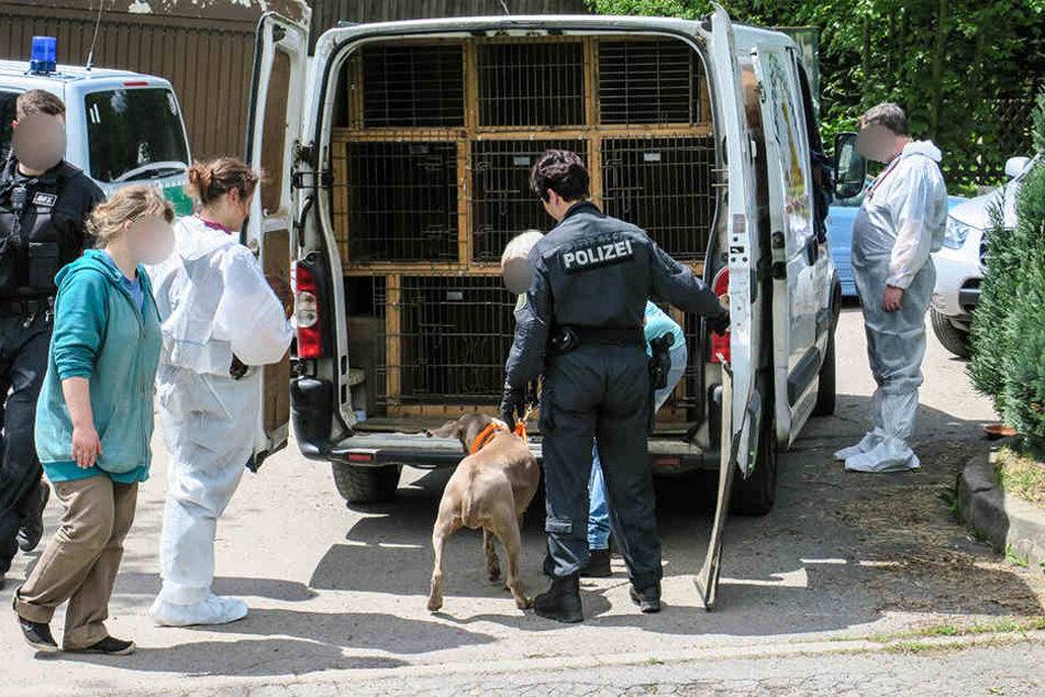 De Tierschutz bringt mehrere Hunde vom Grundstück in Transporter.