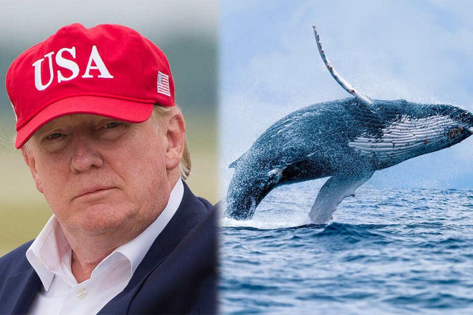 """Weitere Netz-Blamage: Donald Trump und der """"Prince of Whales""""."""