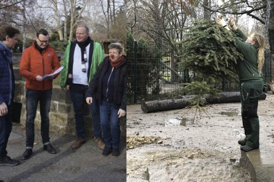 Dresden: Die Weihnachtsbaum-Abholer kommen für den guten Zweck