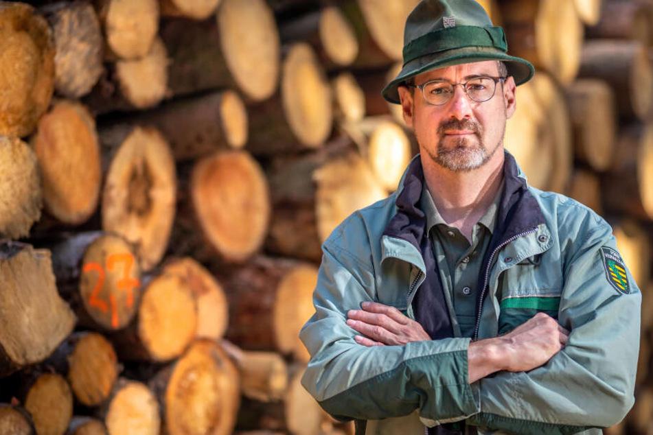 Revierförster Ullrich Göthel (50) bietet am Samstag das traditionelle Weihnachtsbaumschlagen im Rabensteiner Wald an.