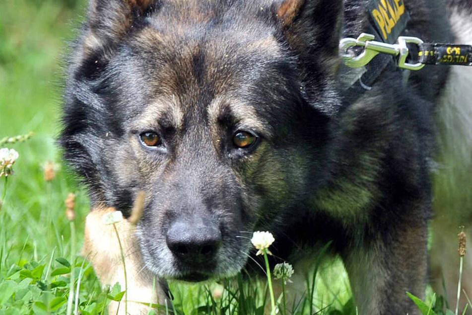 Die Polizei suchte auch mit einem Fährtenhund nach dem flüchtigen Fahrer. (Symbolbild)