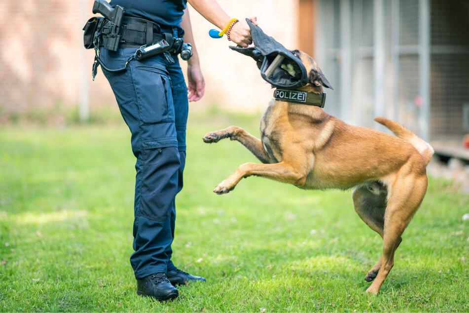 Ein anonymes Schreiben beschuldigt die beiden Trainer, die Hunde bei der Ausbildung gequält zu haben (Symbolbild).