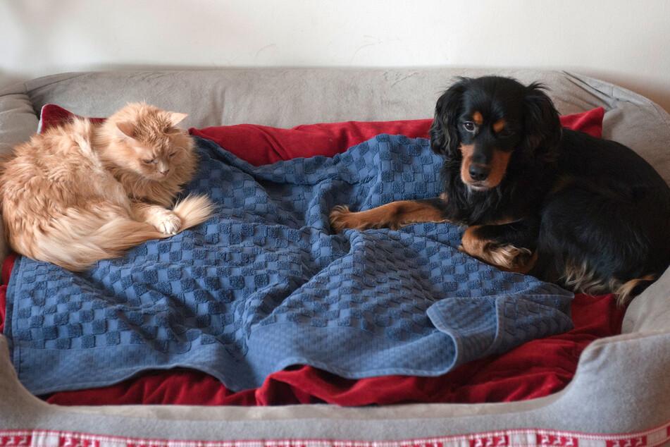 Hund und Katze: Deutsche halten immer mehr Haustiere - mit Auswirkung auf den Arbeitsmarkt!